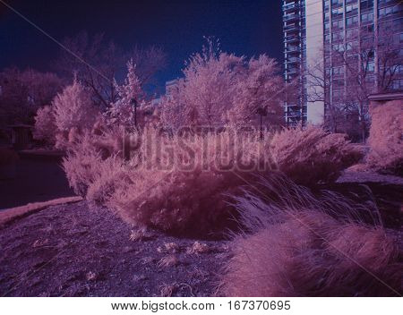 infrared color swap photography trees and bushes landscape