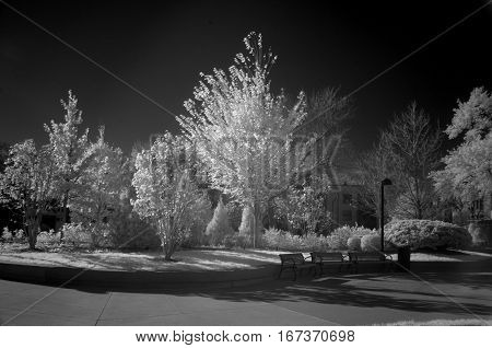 infrared black and white photography trees and bushes landscape