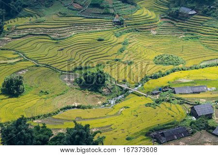 Rice fields on terraced in rainny season at Mu Cang Chai, Yen Bai, Vietnam. Rice fields prepare for transplant at Northwest Vietnam