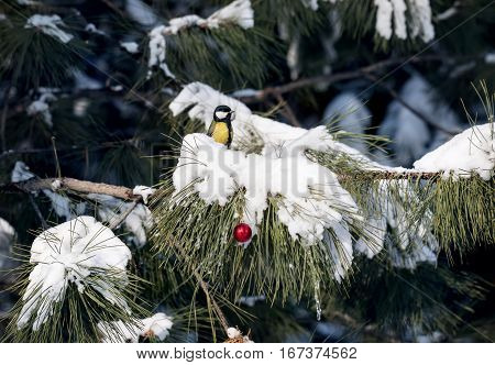 Great Tit At Christmas Tree