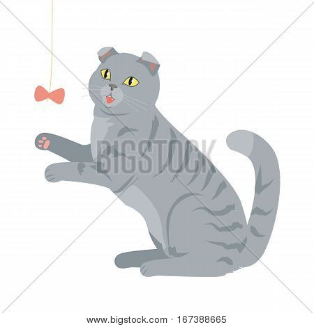Scottish fold isolated on white background. Breed of domestic cat. Cartoon kitten playing with a toy. Grey color cat with stripes. British fluffy cat in flat style. Vector design illustration