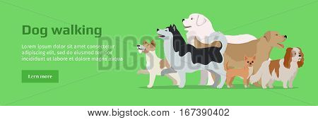 Professional dog walking banner. Group of different breeds dogs on green background. Website horizontal template. Dog service. Vector illustration in flat style. Cartoon dog character, pet animal
