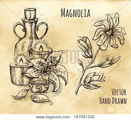 Graphic still life with natural cosmetics, candles, lily and magnolia flower. Hand drawn engraved illustration. Vintage drawing in sketch style. Aromatic perfumery plant set