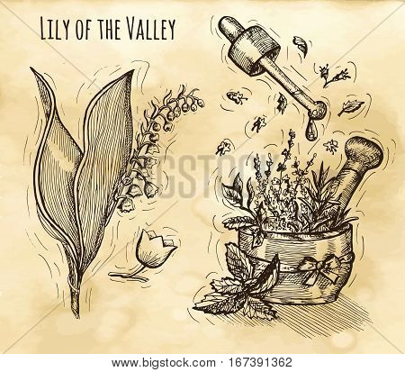 Graphic set with herbal cosmetics still life and lily of the valley flower. Hand drawn engraved illustration. Vintage drawing in sketch style. Aromatic perfumery plant set