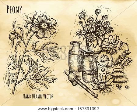 Graphic set with natural cosmetics still life and peony flower. Hand drawn engraved illustration. Vintage drawing in sketch style. Aromatic perfumery plant set