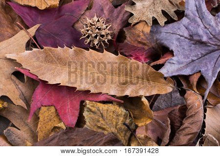 Dry Leaves On As An Autumn Background