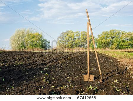 garden shovels and rakes are on the plowed land in suburban garden