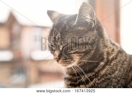 striped kitten sitting at the window portrait of a domestic cat