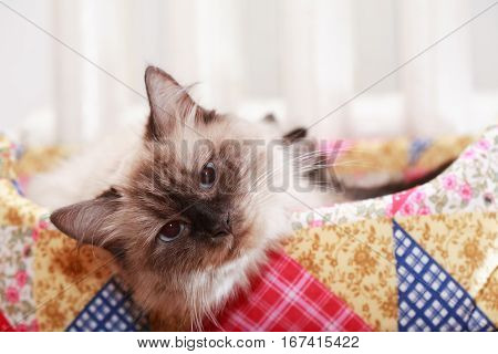 Closeup portrait of nice domestic cat in basket