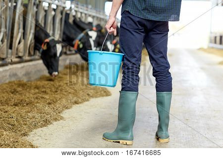 agriculture industry, farming, people and animal husbandry concept - young man or farmer with bucket in cowshed and cows on dairy farm