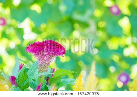 Close up of garden flowers for background