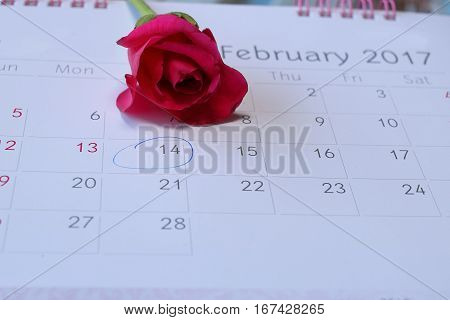 Calender page with mark on Valentine's day February 14 with one beautiful red rose background.
