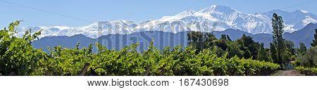 Andes & Vineyard Panorama, Lujan de Cuyo, Argentina