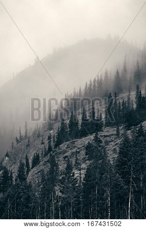 Misty mountain in Banff National Park