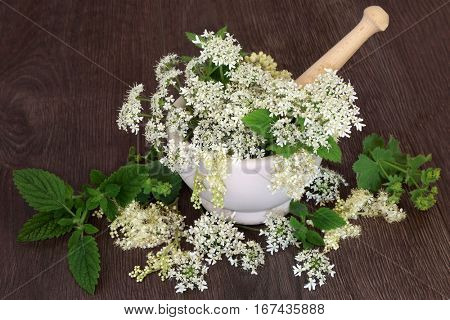 Natural flower and herb medicine with meadowsweet, queen annes lace, ladies mantle, angelica seed heads and mint with mortar and pestle on oak.