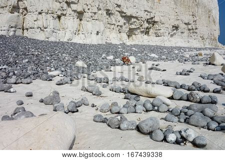 Low tide Seven Sisters National park East Sussex UK chalk coastline selective focus