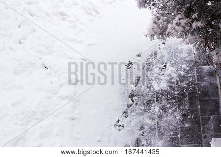 Snow-covered yard and footprints in snow arborvitae branch under snow in side top view