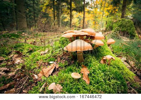 Detail shot of mushrooms growing on the forest floor
