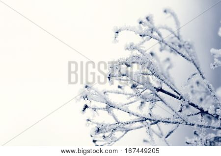 plant covered with white ice on a white background