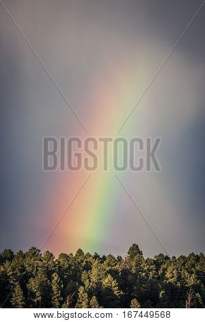 Rainbow in the forest near Flagstaff Arizona