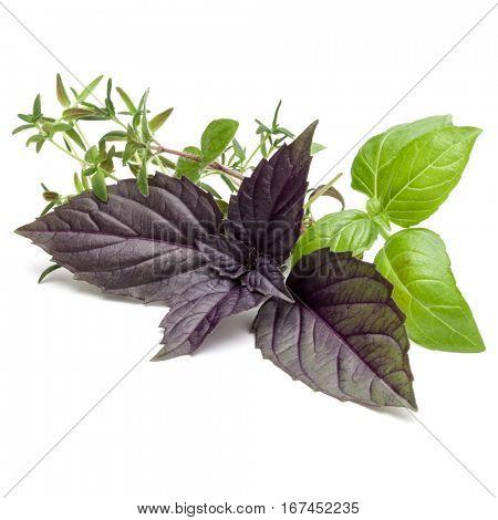 Fresh herb leaves variety isolated on white background. Purple dark opal basil, sweet basil, oregano, thyme.