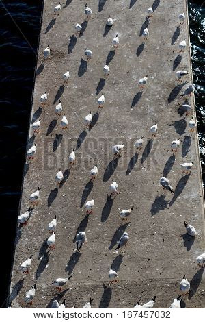White seagulls playing in a water pond