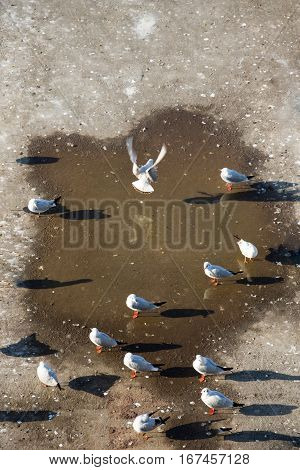 White seagulls playing on a water pond