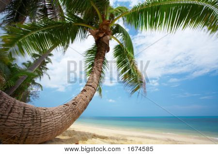 Round Shape Palm