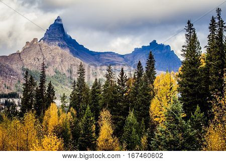 Aspen trees with colorful leaves in the fall