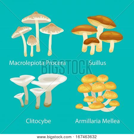 Vector isolated edible natural mushrooms in nature set, organic vegetable food collection of illustrations, forest mushrooms set drawing