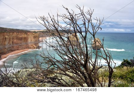 Dry branch on the coast along the Great Ocean Road. Twelve Apostles rock formations in the background.
