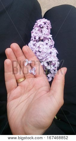 Lilac flower lilac on the hand, three petals on the head, luck, fortune telling