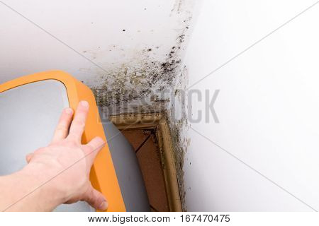 Mold and fungus behind rubbish bin on wall.