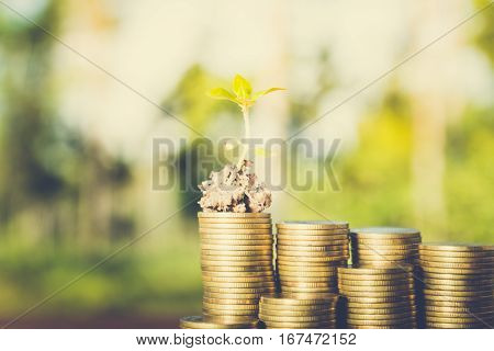 plant growing out of coins concept of corporate social responsibility (csr)