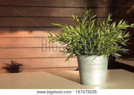 Plant with green leaves in a pot on top of the table with a nice wooden pattern in the background