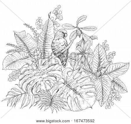 Hand drawn branches and leaves of tropical plants. Monochrome floral bunch with bird. Parrot sitting on branch. Black and white coloring page for adult. Vector sketch.