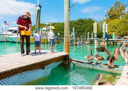 Young father and two little kid boys feeding fishes and big brown pelicans in port of Islamorada, Florida Keys. Man and his sons, preschool children having fun with observing animals.