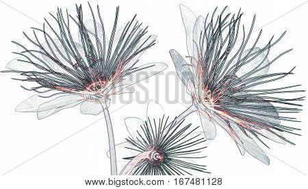 X-ray Image Flower Isolated  , Passion Flower
