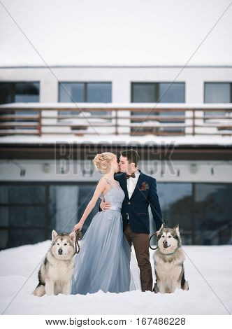 Bride and groom in winter with two dogs malamute on snow and home background. They are kissing.
