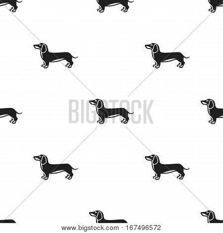 Dachshund vector illustration icon in black design