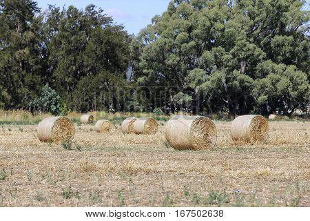 Hayrolls On The Field In Mudgee, Australia