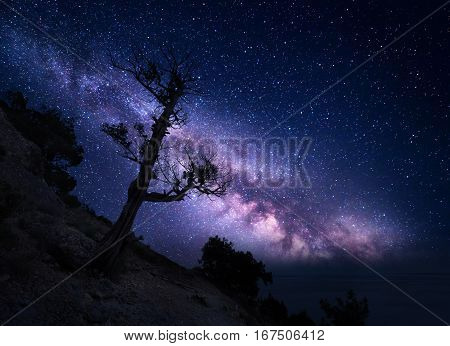 Tree on the mountain against Milky Way. Night landscape. Night colorful scenery. Starry sky in summer. Beautiful universe. Space background with galaxy and old tree. Purple milky way. Travel