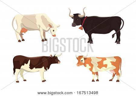 different cows, isolated Vector illustration. Mammal funny animals. Set milk cow isolated