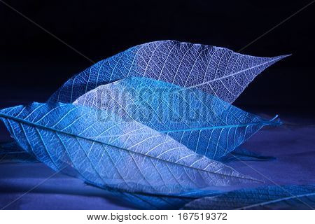 Skeletonized leaves with white and blue gradient against a dark background, side lights