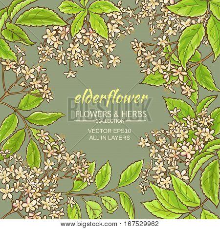 elderflower branches vector frame on color background