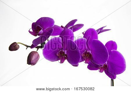 A spray of orchids is captured against a white background