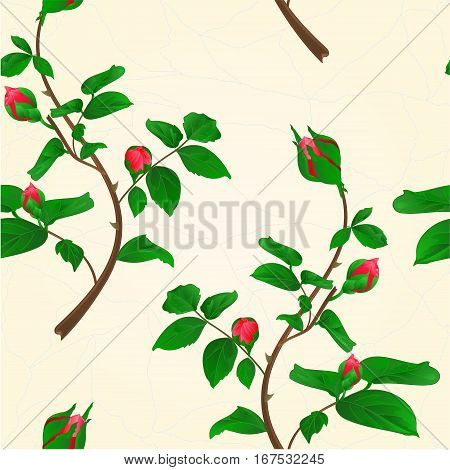 Seamless texture buds of climbing red rose stem with leaves and bud cracks in the porcelain vintage vector illustration