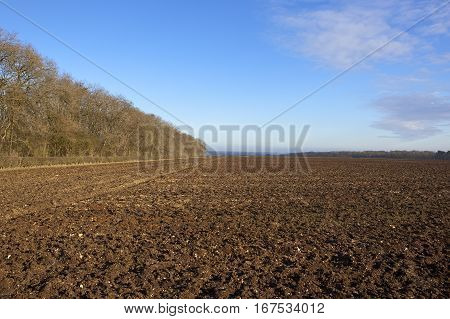 Plow Soil And Trees
