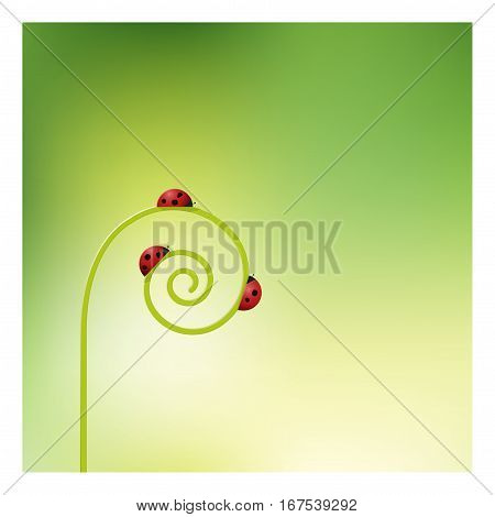 Ladybugs on sprout unrolling background , vector , illustration
