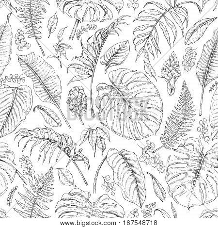 Hand drawn branches and leaves of tropical plants. Monochrome floral pattern. Monstera fern palm fronds sketch. Black and white seamless texture.